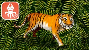 Drawing of a tiger missing some stripes with the logo of You and the Flying Squid App