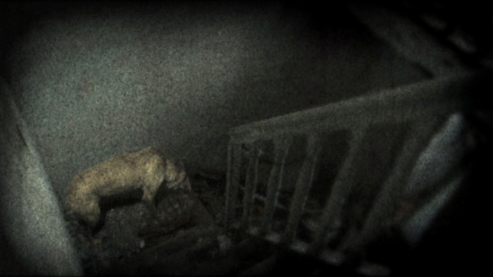 A dog in an abandoned space